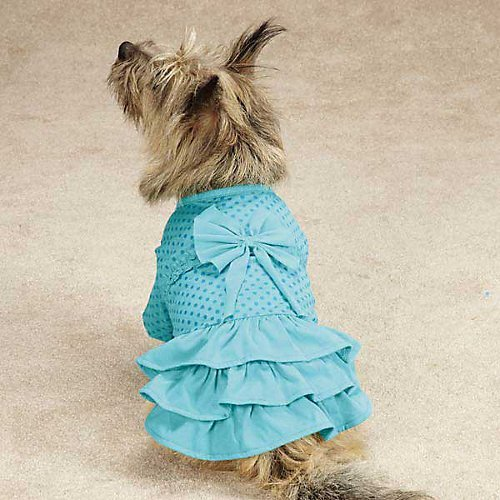 Zack & Zoey Polka Dot Ruffle Dog Dress Color: Raspberry, Size: Medium (0.25' H x 16' W x 11.5' D)
