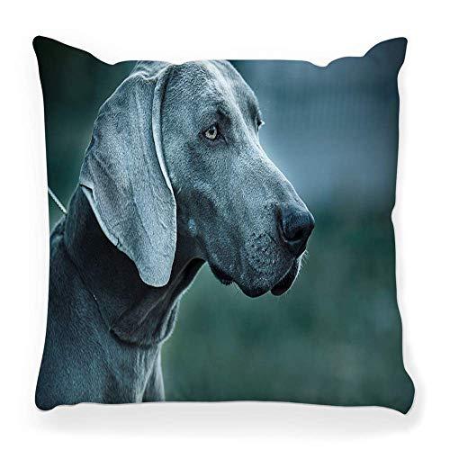Funda de Cojine Funda de almohada decorativa retrato Weimaraner Adorable atención animal belleza canino negro lindo perro cara doméstica amigable Throw Cojín 45X45CM