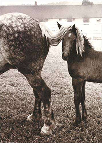 Foal Under Horses Tail - Avanti America Collection Encouragement Card