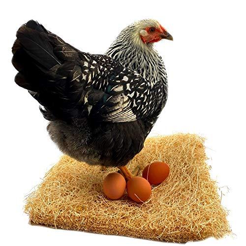 Backyard Barnyard 12 Pack Chicken N…