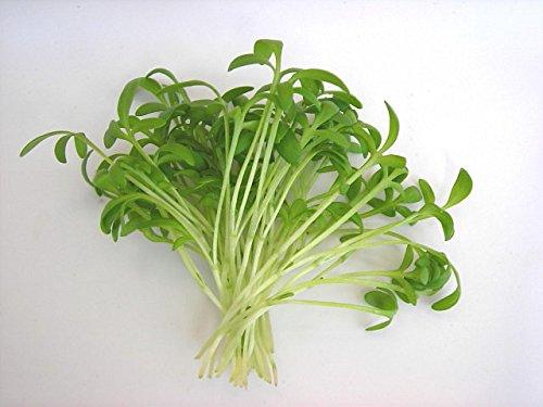 1600x Pepper Cress Graines Recroquevillé Herbe Jardin Herb MicroGreen Sprout