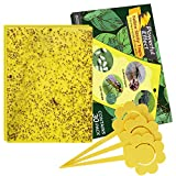Kensizer 30-Pack Fruit Fly Trap, Yellow Sticky Gnat Traps Killer for Indoor/Outdoor Flying Plant...