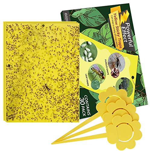 Kensizer 30-Pack Yellow Sticky Gnat Traps Killer for Indoor/Outdoor Flying Plant Insect Like Fungus Gnats, Whiteflies, Aphids, Leaf Miners, Other Flying Plant Insects - 6x8 Inches, Twist Ties Included