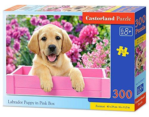 Labrador Puppy in Pink Box 300 pcs Puzzle   Rompecabezas (Puzzle Rompecabezas, Fauna, Niños, Perro, Niño/niña, 8 año(s))