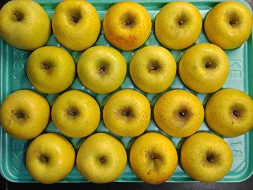 減農薬 長野 シナノゴールド りんご A品 約9kg 16〜50個入 リンゴ 林檎 産地直送 小山 NG 10g