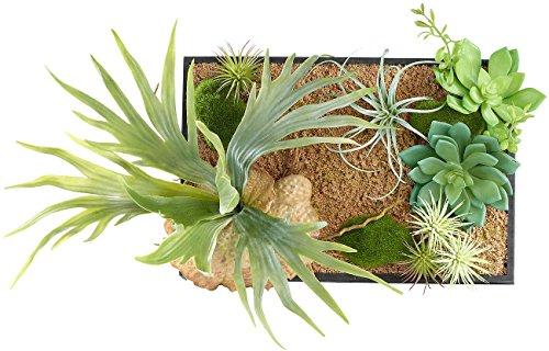 Carlo Milano Wandpflanzen: Vertikaler Wandgarten Lisa mit Deko-Pflanzen, 20 x 30 cm (Pflanzen Bilder)