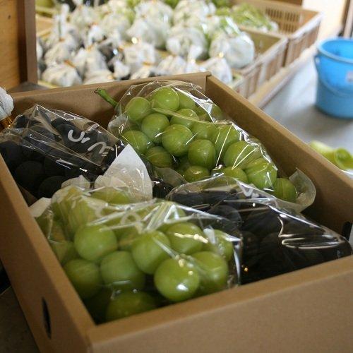 (2kg箱) 山梨県産 ぶどう詰合せセット ぶどう農家が選ぶ・旬な葡萄を厳選詰合せ