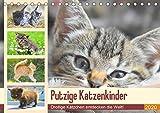 Putzige Katzenkinder. Drollige Kätzchen entdecken die Welt! (Tischkalender 2020 DIN A5 quer)