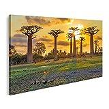 Bild Bilder auf Leinwand Wunderschöne Affenbrotbäume bei