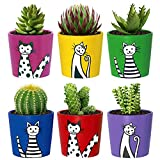 Succulent Pots, 2.7 Inch Small Ceramic Cactus Pots for Plants, Cute Mini Succulent Planters for Office Home, Indoor Plant Pots with Drainage (6 Pack, Plants Not Included)