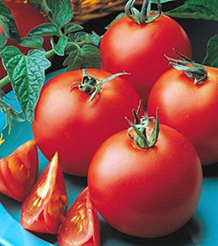 Tomaten Hilds Matina Samen