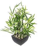 khevga plante de bambou décoratif dans le pot
