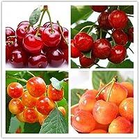 30 個の混合ドワーフ チェリーの種子を含む甘くておいしい開花果樹で、ガーデニングや菜園のバルコニーでの装飾に適しています。