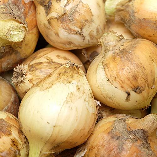 【サイズ混合】新玉ねぎ 3kg 自然農法 (兵庫県淡路島 花岡農恵園) 産地直送 ふるさと21