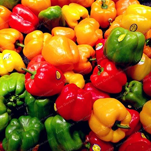 Shopvise de piment de semences de légumes 100 unités; couleur 9
