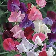 Flower Sweet Heaven Scent Mixed