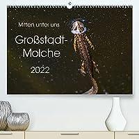 Mitten unter uns - Grossstadt-Molche (Premium, hochwertiger DIN A2 Wandkalender 2022, Kunstdruck in Hochglanz): Grosse und kleine Teichmolche (Monatskalender, 14 Seiten )
