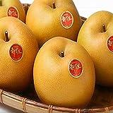 【鳥取県産】秀品 新甘泉 約5kg 梨 赤梨 大きさお任せ