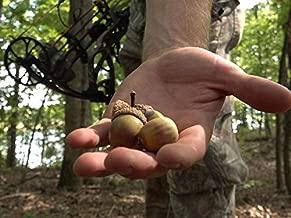 Missouri - Finding Deer on Acorns, Public Land Bowhunting!