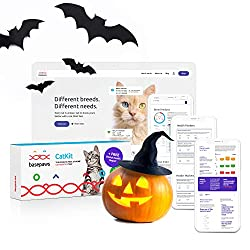 The Ultimate 2019 Holiday Gift Guide for Cats and Cat Lovers + GIVEAWAY!!! Cat DNA Testing Kit