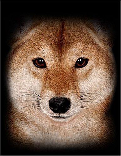 【柴犬 犬 いぬ】 余白部分にオリジナルメッセージお入れします!ポストカード・はがき(黒背景)