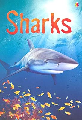 Sharks (Usborne Beginners)