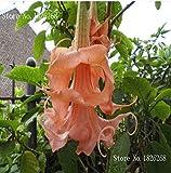 semi Bonsai Mandala Brugmansia Datura semi Rare plantas semi di fiori in vaso di colore misto giardino decorazione vegetale 50pcs Q1