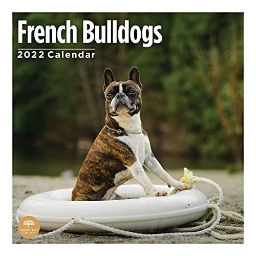 2022 French Bulldogs Wall Calendar by Bright Day, 12 x 12 Inch, Cute Dog Puppy