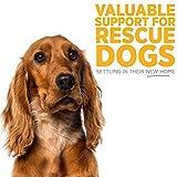 MaxxiCalm, Beruhigungshilfe für Hunde, 120 Tabletten mit Lebergeschmack - 7