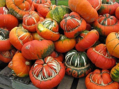 Turk Turban Squash/Gourd 10-40 graines HEIRLOOM NON OGM