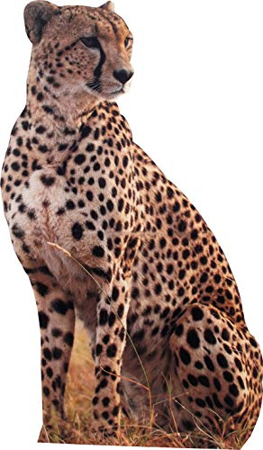 aahs!! Engraving Animal Life Size Cardboard Cutout Stand Up | Standee Picture Poster Photo Print (Cheetah)