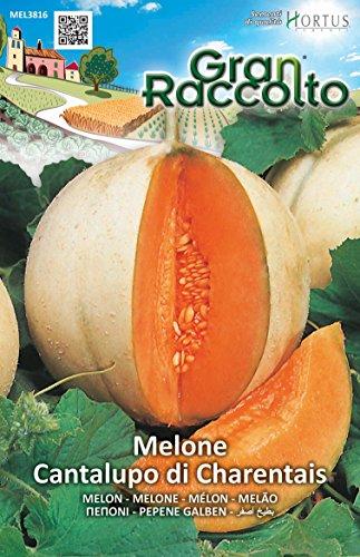 Hortus 38MEL3816 Gran Raccolto Melone Cantalupo Charentais, 13x0.4x20 cm
