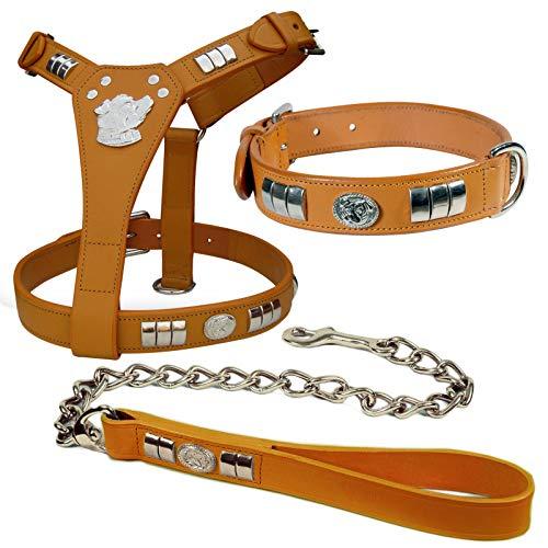 Aces Equine STAFFORDSHIRE BULL TERRIER - Juego de arnés para perro, collar y cadena