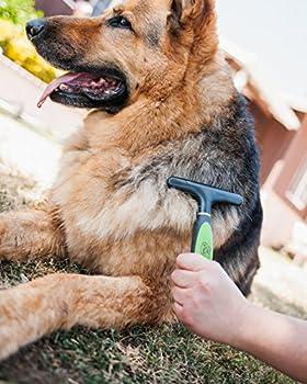 Brosses de toilettage pour chiens - Outils de toilettage professionnel avec structure en acier inoxydable pour petits, moyens et grands chiens, chat, cheval