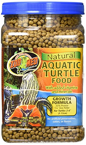 Zoomed Turtle Food
