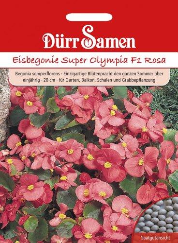 Dürr Samen 1107 Eisbegonie Super Olympia F1 rosa (Eisbegoniesamen)