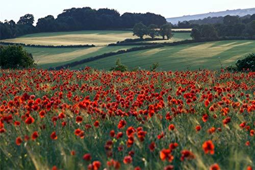 lxlwxh541 Diamant Malerei Red Poppies Field Arts Craft Home 40X50Cm Round Geschenk