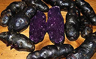 Simply Seed - 15 Piece - Purple Peruvian Potato Seed - Non GMO - Organic Grown - Order Now for Spring Planting