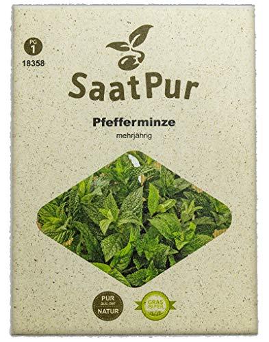 SaatPur Pfefferminze Samen, Saatgut für ca. 600 Pflanzen
