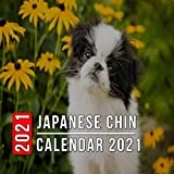 Japanese Chin Calendar 2021: 12-month mini Calendar from Jan 2021 to Dec 2021, Cute Gift Idea For Japanese Chin Lovers Or Owners Men And Women | Pictures in Every Month