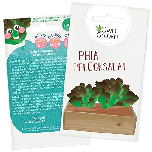 Salat Samen: Premium Pflücksalat Samen für Kinder und Erwachsene – Gemüse Samen für 200x Brauner Pflück Salat Pflanze – Phia Pflücksalat – Garten Gemüse Saatgut für Kids – Samen Gemüse von OwnGrown