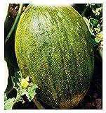 Semillas de melón valenciano temprano - cucumis melo - semillas agrícolas - melones valencianos - alrededor de 90 semillas