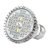 ZREAL 8/10/30/50 / 80W LED Pflanzenlampe E27 Spettro Komplettset für Hydrokulturpflanzen 30W