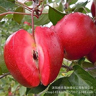 Manzana manzana roja amor de frutas carnes rojas, árboles frutales en macetas se pueden plantar árboles frutales 50 semillas / Paquete