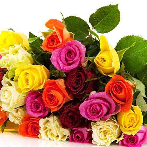 AIMADO Samen-50 Stück Rosensamen Raritäten Duftet Blumensamen mehrjährig winterhart Saatgut Rosen, geeignet für Balkon Garten Outdoor