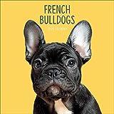 French Bulldog Square Wall Calendar 2020