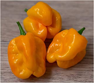 numex suave orange pepper
