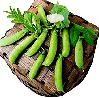 heirloom snap peas