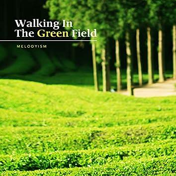 Walking in a green tea field