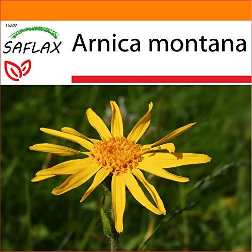 SAFLAX - Jardin dans le sac - Arnica des montagnes - 40 graines - Arnica montana